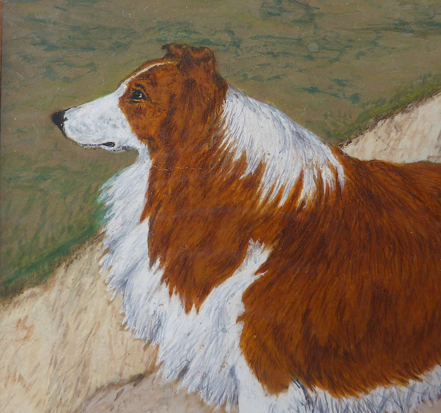 19th Century Painting of a Rough Collie Called Tip