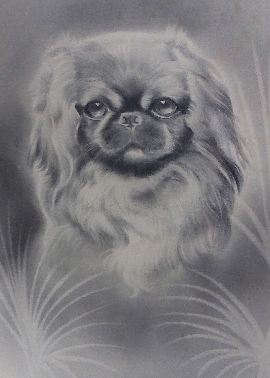 Framed Drawing of a Pekingese by H W Hellings